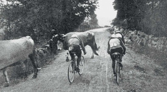 Riders on the Col d'Aspet have a cow to circumnavigate on the way up, 1910
